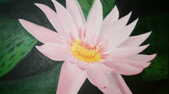 """Pink Waterlily"" by Melissa Fassel Dunn"